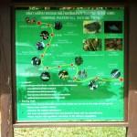 Tongprai Wasserfall Wegweiser