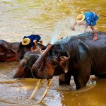 Elefanten-Camp