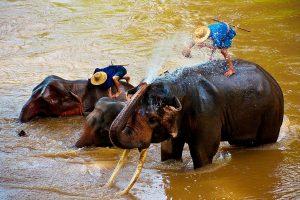 Ein Tag im Elefanten-Camp
