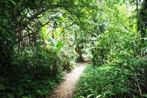 Ausflug zum Khao Sok Nationalpark